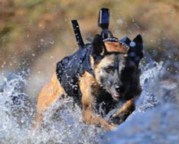 K-9 Dogs | Nirtal